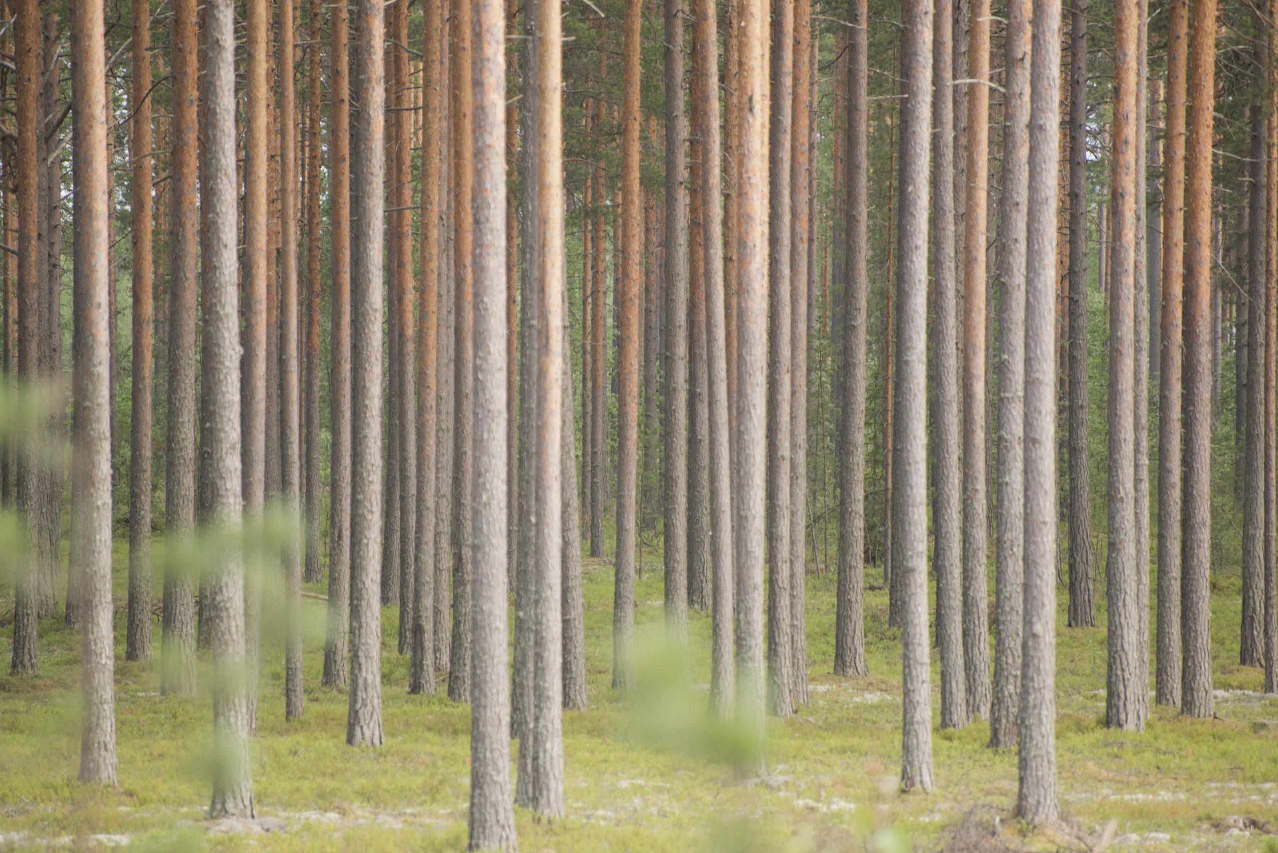 Koronatilanne: näemmekö metsän puilta.